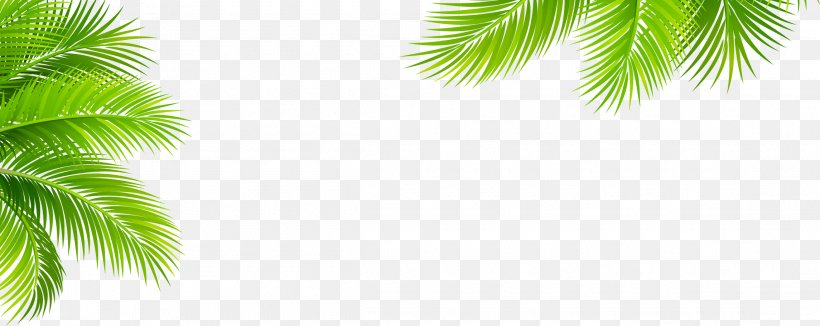 Leaf Pattern, PNG, 2290x913px, Leaf, Arecales, Branch, Drawing, Grass Download Free