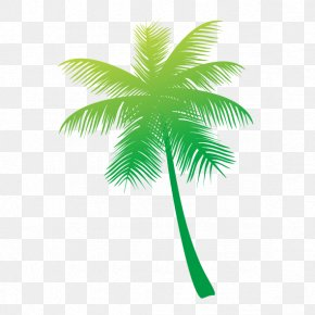 Coconut Tree - Arecaceae Coconut Tree PNG