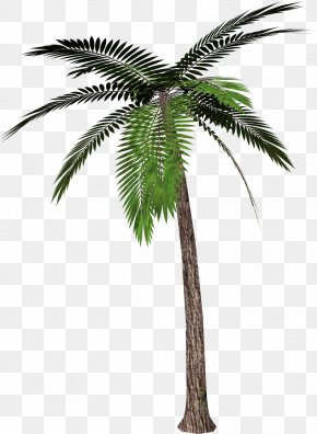 Palm Tree Clipart - Palm Trees Clip Art PNG