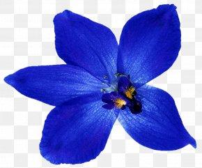 Blue Flower - Blue Flower Orchids Clip Art PNG