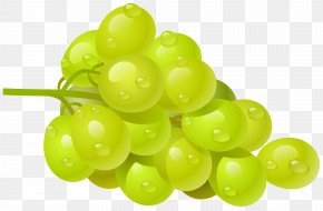 White Grape Clipart Picture - Common Grape Vine Wine Clip Art PNG