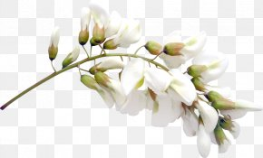 Free Flowers Buckle Material - Cut Flowers Clip Art PNG