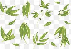 Vector Eucalyptus Leaves Doing Cutout - Gum Trees Leaf Euclidean Vector PNG