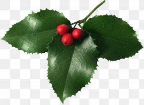 Mistletoe - Mistletoe Christmas Clip Art PNG