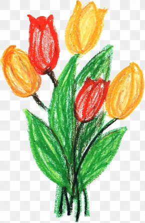 CRAYONS - Cut Flowers Tulip Flowering Plant PNG