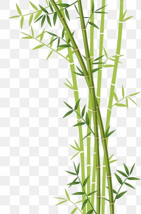Bamboo Download - Bamboo Forest Euclidean Vector Stock Photography PNG
