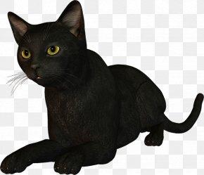 WATERCOLOUR CAT - Black Cat Bombay Cat Burmese Cat Korat Malayan Cat PNG