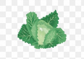 Jade Cabbage - Leaf Vegetable Organic Food Cabbage PNG