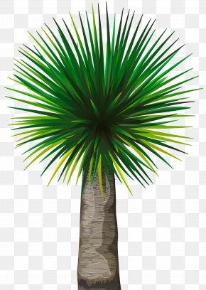 Tree - Asian Palmyra Palm Tree Arecaceae Clip Art PNG