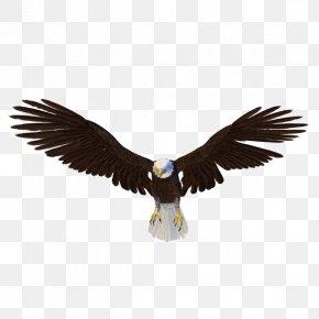 Eagle - Bald Eagle Bird PNG