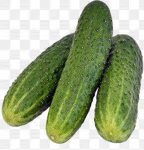 Cucumber - Pickled Cucumber Rassolnik Salad PNG
