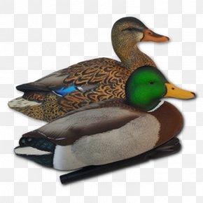 Mallard Duck Silhouette Duck Hunting - Mallard Duck Goose Bird Waterfowl PNG