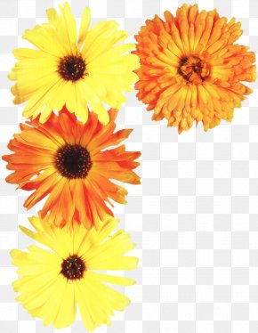 Annual Plant Artificial Flower - Floral Flower Background PNG