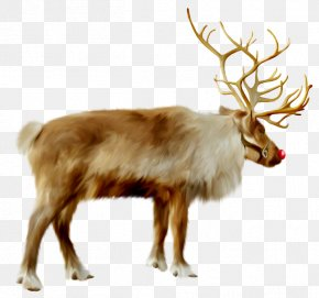Reindeer - Reindeer Santa Claus Christmas Ded Moroz Clip Art PNG