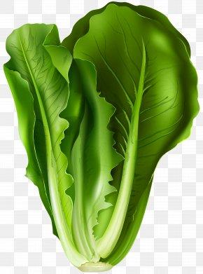 Lettuce Clip Art Image - Romaine Lettuce Lettuce Sandwich Vegetable Clip Art PNG