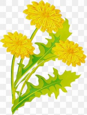 Barberton Daisy Gerbera - Flowers Background PNG
