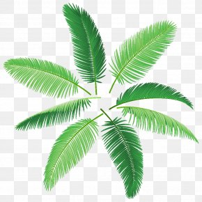 Palm Leaf - Arecaceae Palm Branch Royalty-free Photography PNG