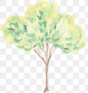 Plant Stem Hydrangea - Green Leaf Tree Plant Flower PNG