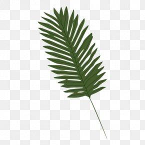 Palm Leaves - Leaf Arecaceae Clip Art PNG