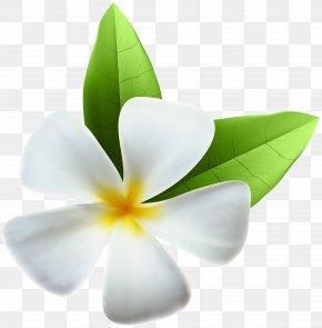 White Exotic Flower Clip Art Image - Flower Clip Art PNG