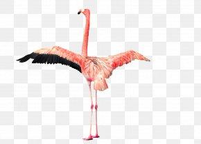 Flamingo - Plastic Flamingo Clip Art PNG