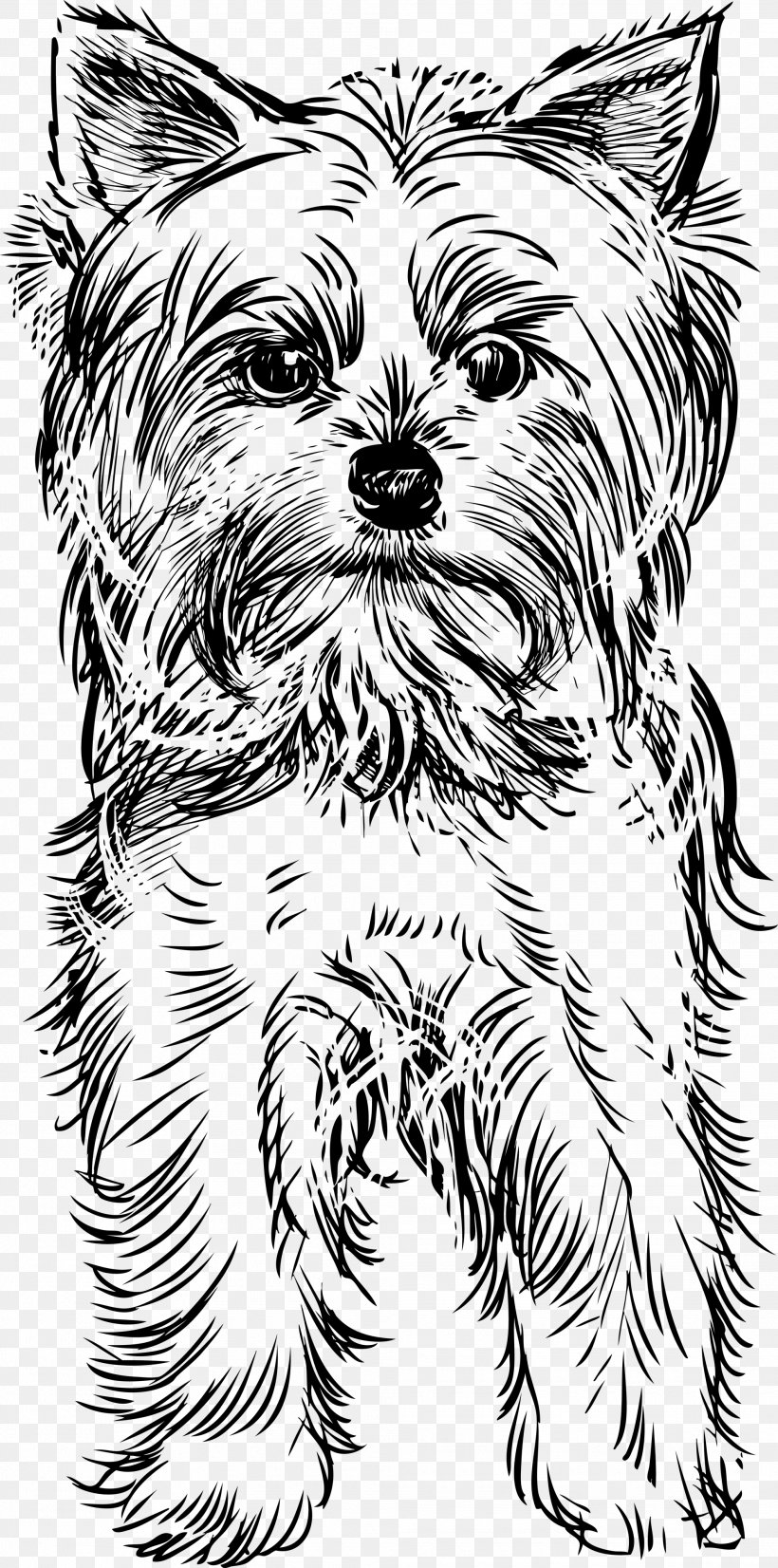 Yorkshire Terrier Puppy Drawing Clip Art Png 1985x4000px Yorkshire Terrier Art Artwork Black And White Cairn