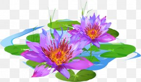 Plant - Floral Design Purple Petal Annual Plant Flowering Plant PNG