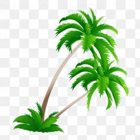 Coconut Tree Material - Arecaceae Coconut Tree Clip Art PNG