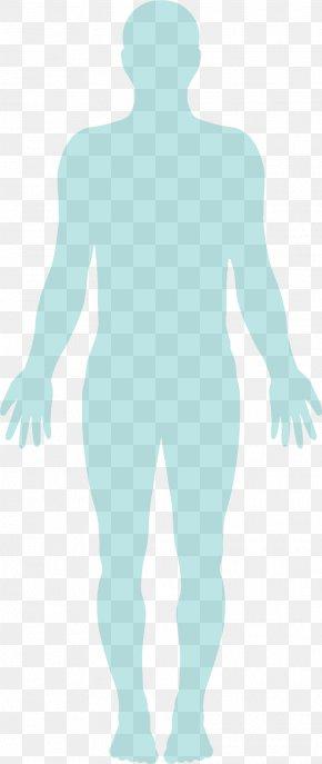 Anatomy Human - Homo Sapiens Hereditary Angioedema Human Body Infographic Technology PNG