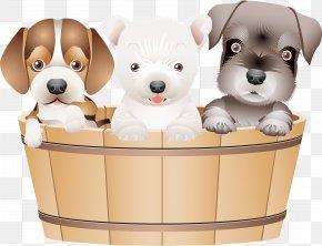 Puppy - Puppy Coton De Tulear Pug Chihuahua PNG