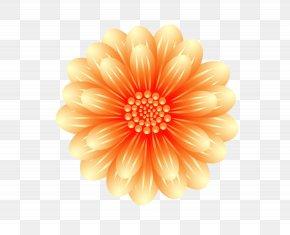 Chrysanthemum Flowers Creative Free Deduction - Chrysanthemum Transvaal Daisy Cut Flowers PNG