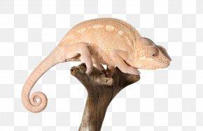 Chameleon On A Dead Tree - Reptile Chameleons Lizard PNG