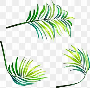 Vector Hand-painted Leaves - Leaf Euclidean Vector Clip Art PNG