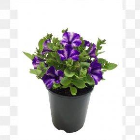 Petunias - Flowerpot Cut Flowers Herb PNG