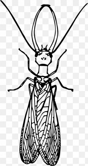 Insect - Insect Dobsonflies Drawing Clip Art PNG