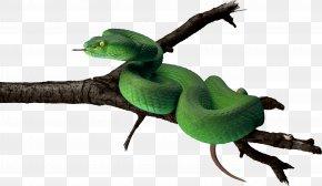 Green Snake Image - Snake Green Anaconda PNG