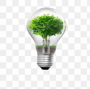 Tree Bulb Creative - Energy Conservation Window Film Business Efficient Energy Use Sustainability PNG