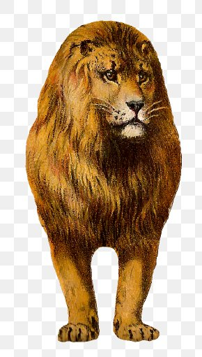African Lion Cliparts - Lionhead Rabbit East African Lion Cat Animal Clip Art PNG