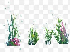 Green Sea Algae Plants And Blisters - Algae Plant Seaweed Ocean PNG