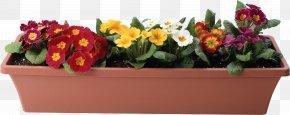 Flower Pot - Flowerpot Plant PNG