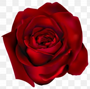 Transparent Red Rose Clipart Picture - Rose Clip Art PNG