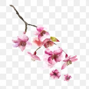 Pink Cherry Blossoms - Japanese Cuisine Sushi Menu Cherry Blossom PNG