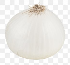 White Onion File - Lighting PNG