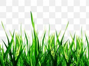 Nature Clipart - Nature Clip Art PNG