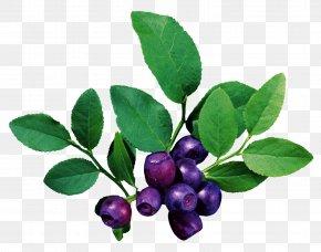 Pomegranate - Fruit Blueberry PNG