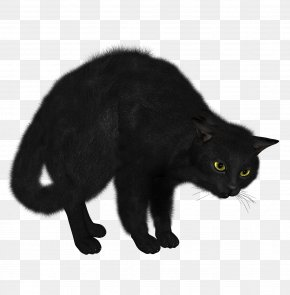 Kitten - Kitten Sphynx Cat Black Cat Clip Art PNG