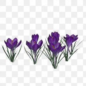 Crocus Photo - Display Resolution Clip Art PNG