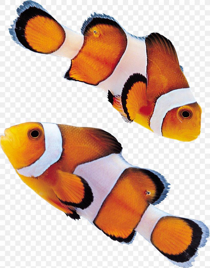 Fish Clip Art, PNG, 1748x2234px, Fish, Beak, Freshwater Fish, Marine Biology, Orange Download Free