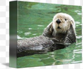 Hear No Evil - Sea Otter Greeting & Note Cards Monterey Bay Marine Mammal PNG