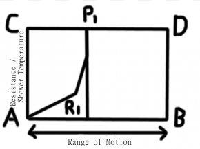 Diagram Of The Forearm - Forearm Diagram Anatomy Clip Art PNG